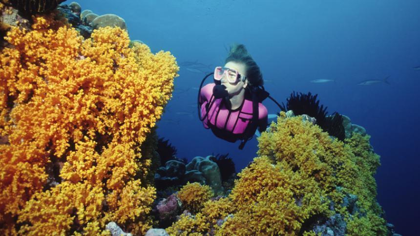 south caicos diving
