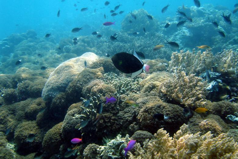 sipadan diving reef