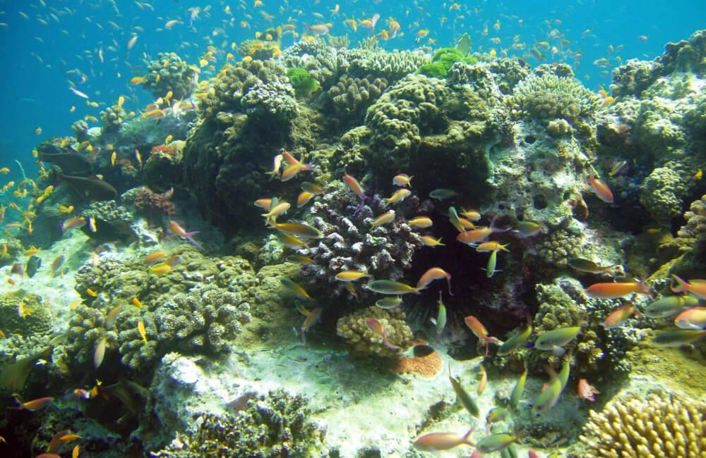 mafia island reef