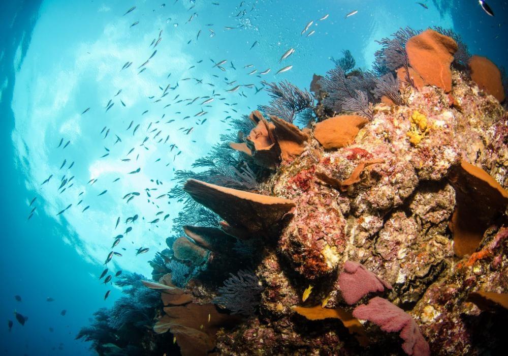 sea of cortez reef