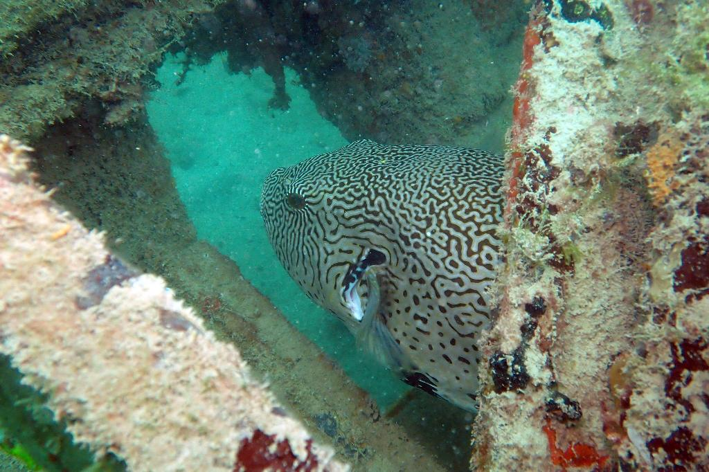 pulau hantu diving