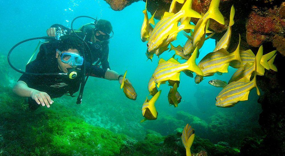 Fernando de Noronha diving