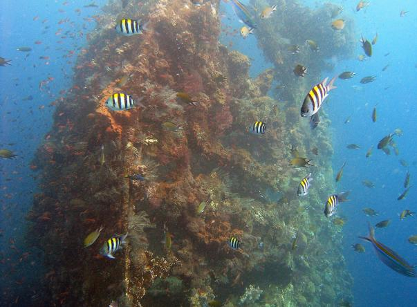 Picture added by Baruna Dive Bali