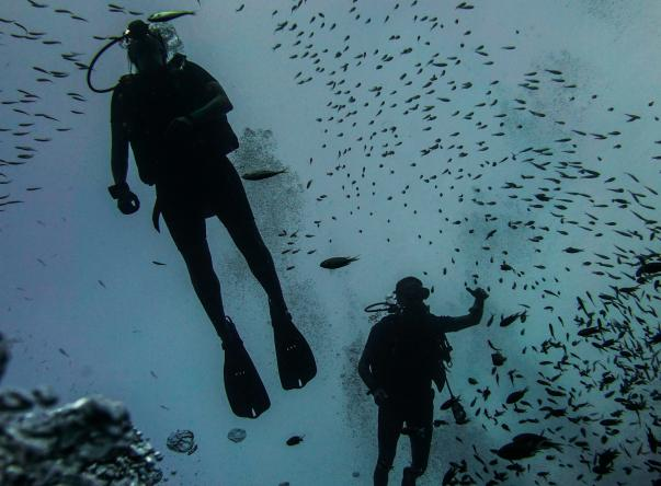 Picture added by Roctopus Dive