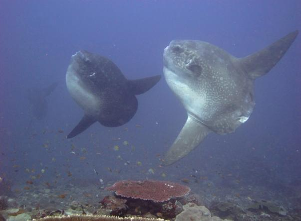 Picture added by Tamarind Divers