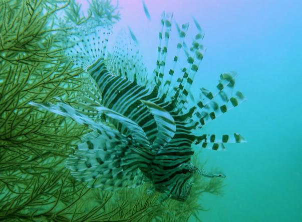 Aquanaut Dive Center Picture