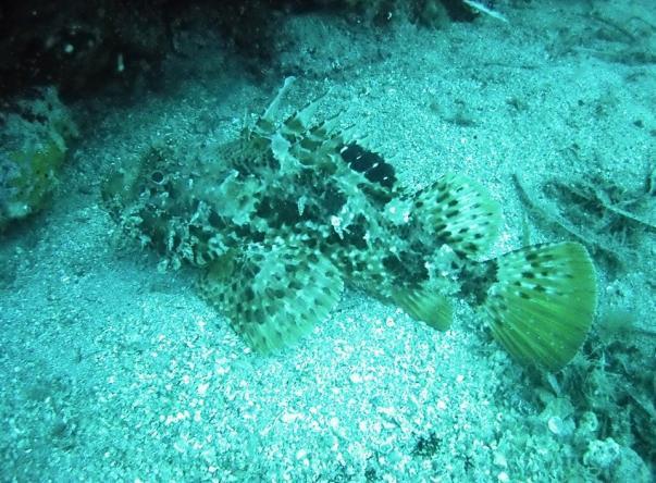 Foca Dive Center   Picture