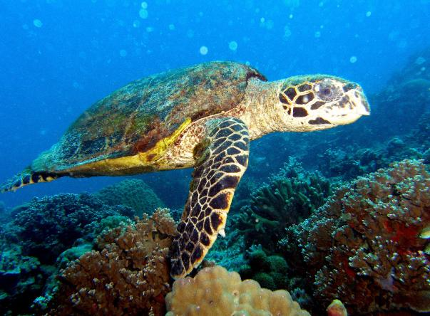Tropical Diving Picture