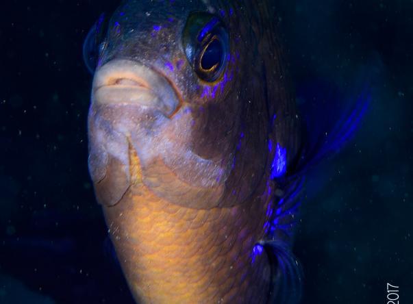 Scorpio Madeira Diving Center Picture