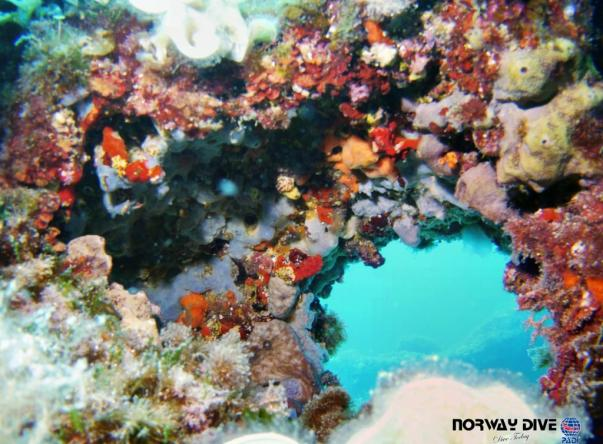 Picture added by Norway Dive