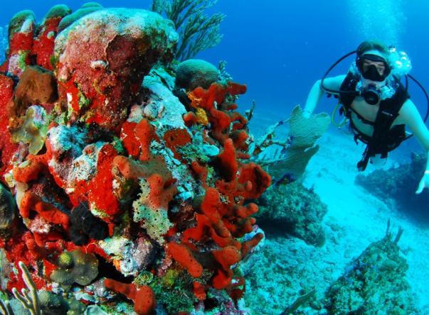 Scuba Cancun Picture