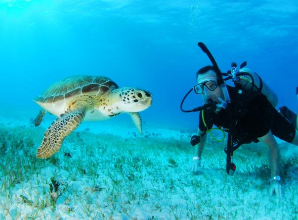 Picture added by Scuba Cancun