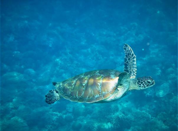 Aqua Fun Bonaire Picture