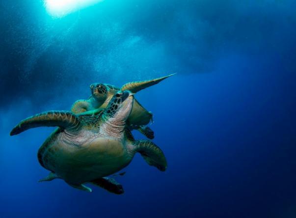 Foto de Cebu Fun Divers