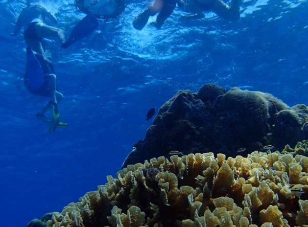 Picture added by Dive With Cristina