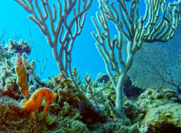 Picture added by Dive Cabarete