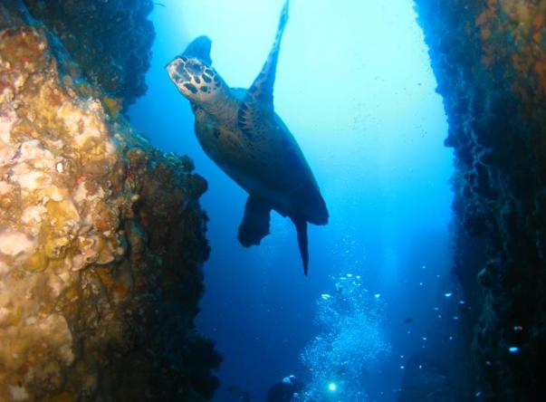 Picture added by Dive Centre Bondi