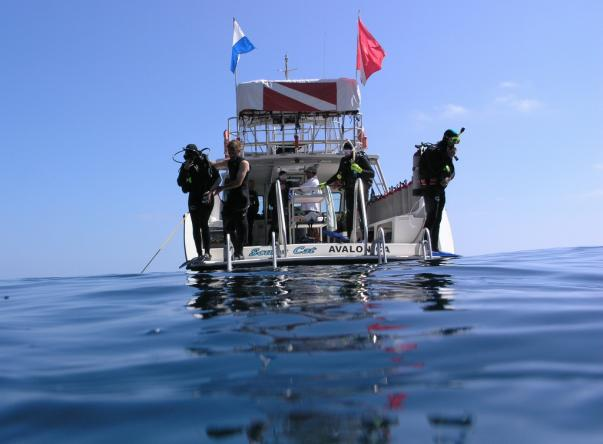 Picture added by Catalina Divers Supply