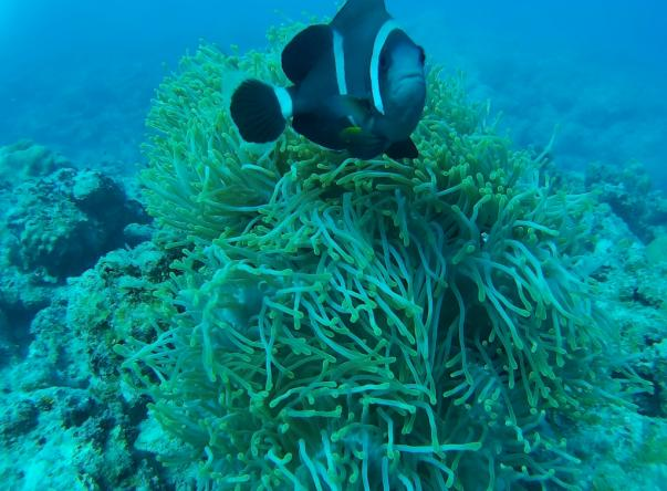 Picture added by Tamarin Ocean Pro Diving Ltd
