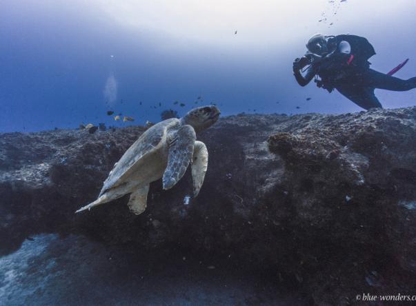 Liquid Dive Adventures Picture