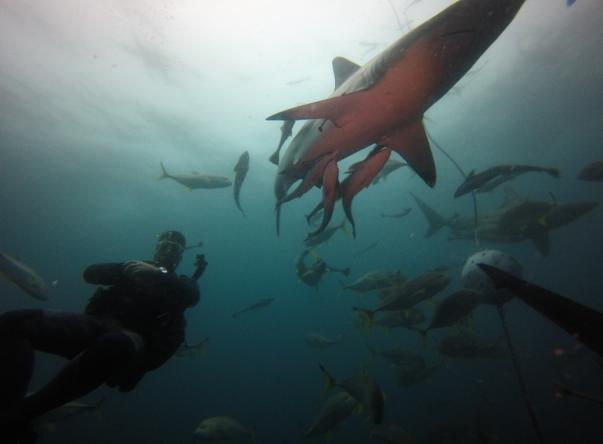 Blue Ocean Dive Resort Picture
