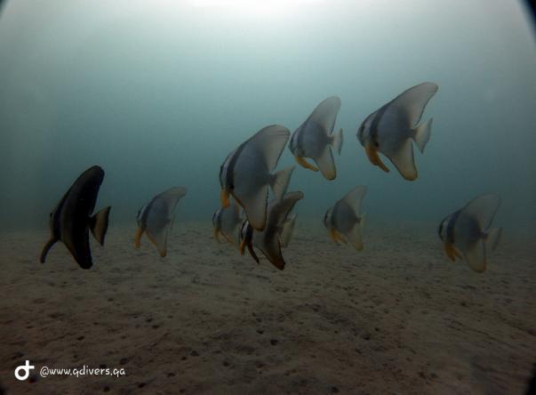 Фото Qdivers Qatar