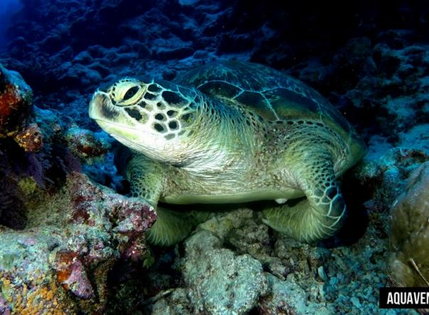 Picture added by Aquaventure Dive Center