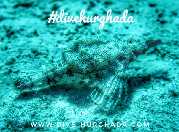 Picture added by Dive Hurghada