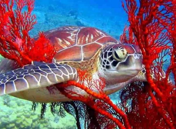 Terumbu Divers Picture