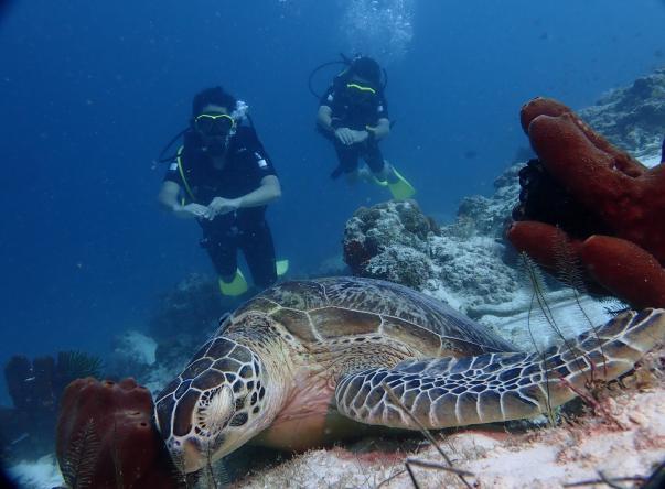 Foto de Aqua Sapien Dive Services