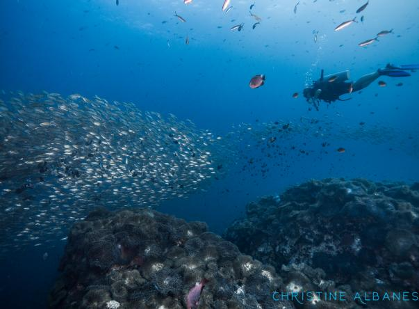 Picture added by New Way Diving