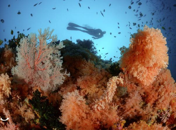 Foto de Tompotika Dive Lodge