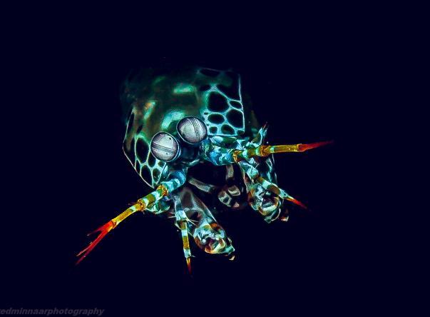 Manta Dive Gili Trawangan Picture