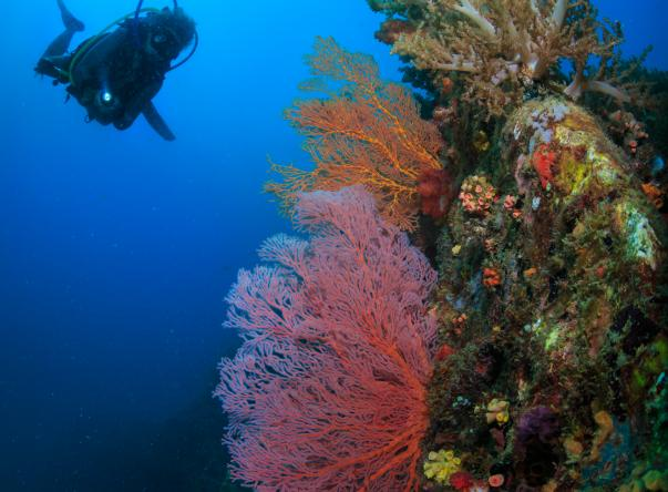 Picture added by Tioman Dive Centre