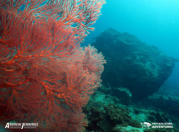 Picture added by Pattaya Scuba Adventures