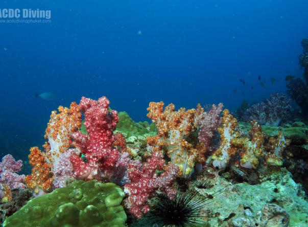 Acdc Diving - Andaman Coast Dive College Picture