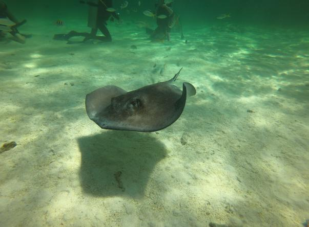 Picture taken by ed bolton at Stingray City on May 17, 2018