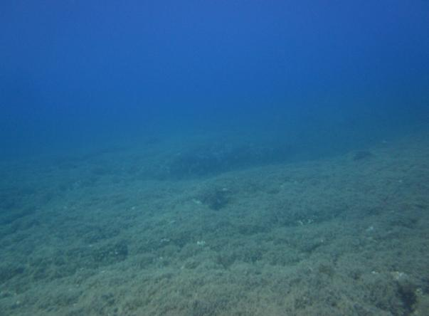Adabanko Reef's Picture