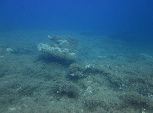 Image Adabanko Reef's
