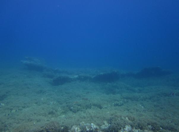 Picture taken by SAFİYE ARI at Adabanko Reef on May 22nd, 2018