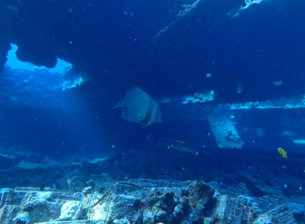 Picture taken by gyszaloki at Chrisoula K. (Marcus) Wreck of the Tiles on Jun 3, 2018