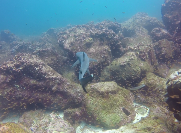 Picture taken by MKE at Mosquera Islet on May 9, 2019