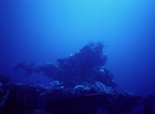 Picture taken by Brian George at Fujikawa Maru on Mar 29th, 2020