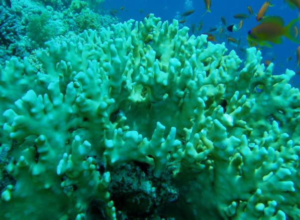 Picture taken at Woodhouse Reef. Uploaded by José Cabral on Apr 18, 2020