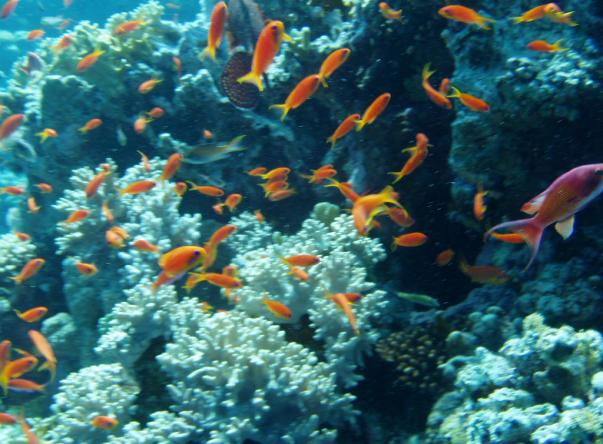 Picture taken by José Cabral at Jackson Reef on Apr 18, 2020