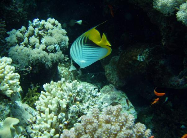 Picture taken by José Cabral at Jackson Reef on Apr 22, 2020