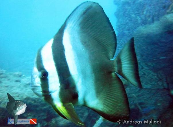 Picture taken by Andre Kafe Penyelaman at Indonor Wreck on Jan 24, 2021