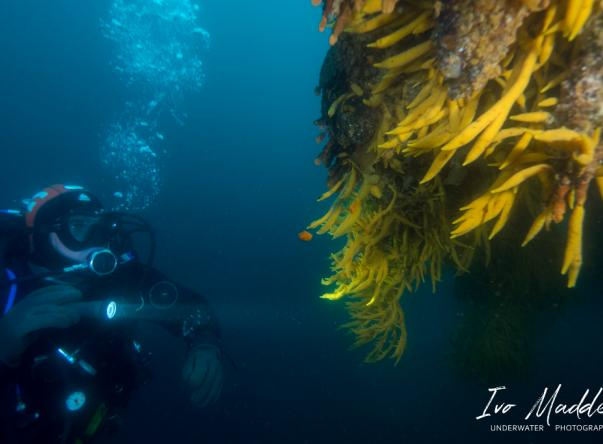 Picture taken by Ivo Madder at D/S Guvernoren wreck on Apr 5, 2021