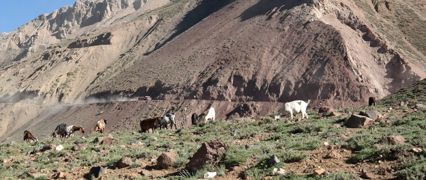 field with goats