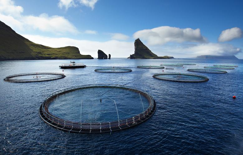 Faeroer-Lachs-Produkte-Fische-Herkunft
